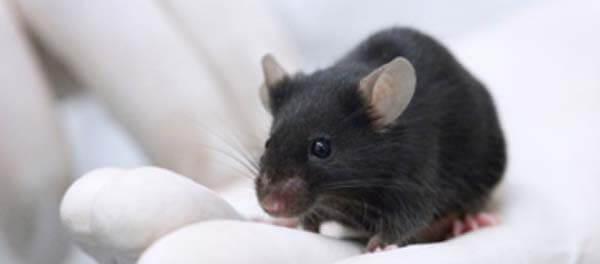 origin of mickey mouse oswald the lucky rabbit disney creepypasta urban legend creepy záhada darktown.cz