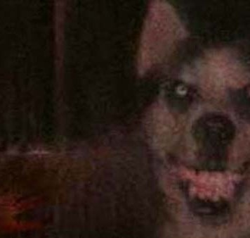 slime.jpg smile.dog slime dog creepypasta časky cz darktown.cz creepy strach děsivé fotka obrázek origin really