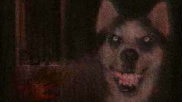 Photo of Smile Dog – Creepypasta Česky