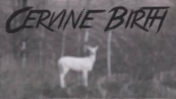 Photo of Cervine Birth – Ztracená videa