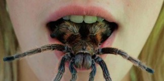 Creepy Crawlies - Feel Them Crawling creepypasta česky darktown.cz pavouci v puse spider mouth