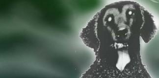 graying dog šedivějící pes creepypasta česky darktown.cz creepycon