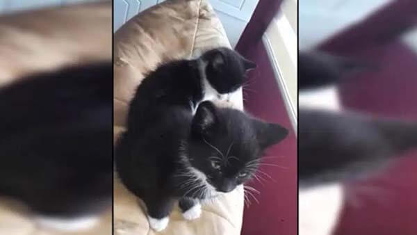 Legální kočička porno